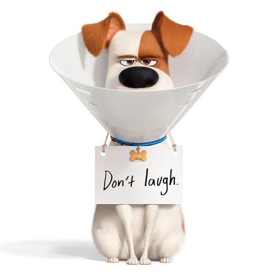 Cukiságfaktor a köbön-Pets2 lámpák a VARTA kínálatából